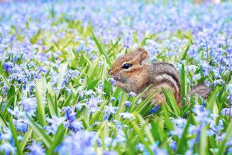 20 zaskakujących ciekawostek o wiewiórkach