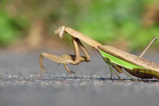21 niezwykłych informacji o owadach dla dzieci