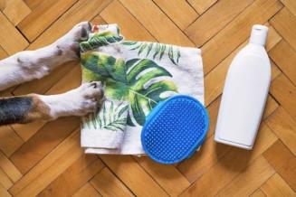 Czy i jak należy kąpać psa?