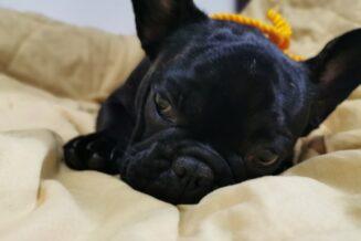 Yellow Dog Project Czyli Co Oznacza Żółta Wstążka u Psa?