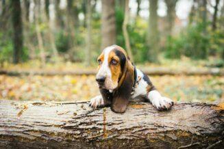 Jak dbać o psa jesienią?