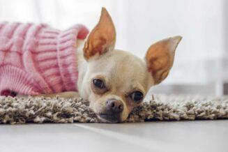 Zimowe ubranka dla psów