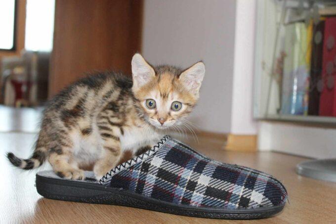kot w kapciu