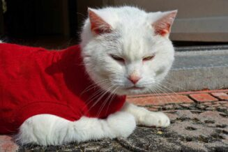 Zimowe ubranka dla kotów