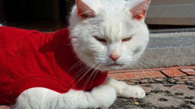 odzież dla kota