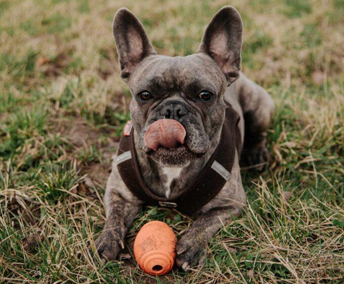 pies i zabawka