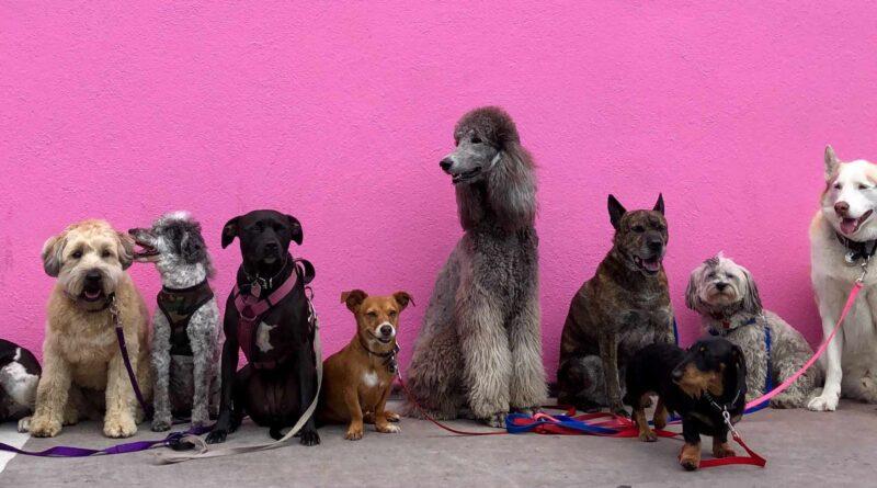 różne rasy psów