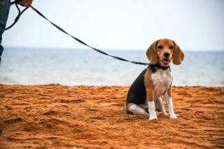 Biegunka u psa – przyczyny i jak jej przeciwdziałać?