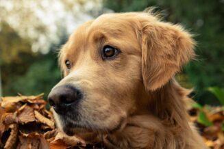 Psi fryzjer, czyli kim jest i czym zajmuje się groomer
