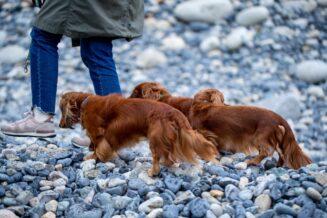 Buty dla psów – tak czy nie?